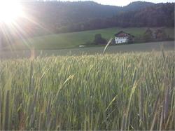 Bergbiohof Ausserbrunner