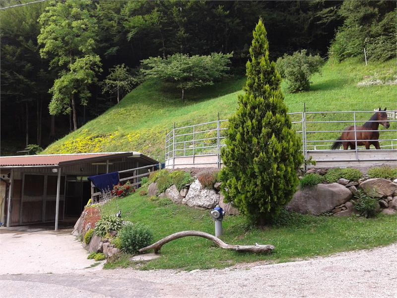 Ponyhof Holen