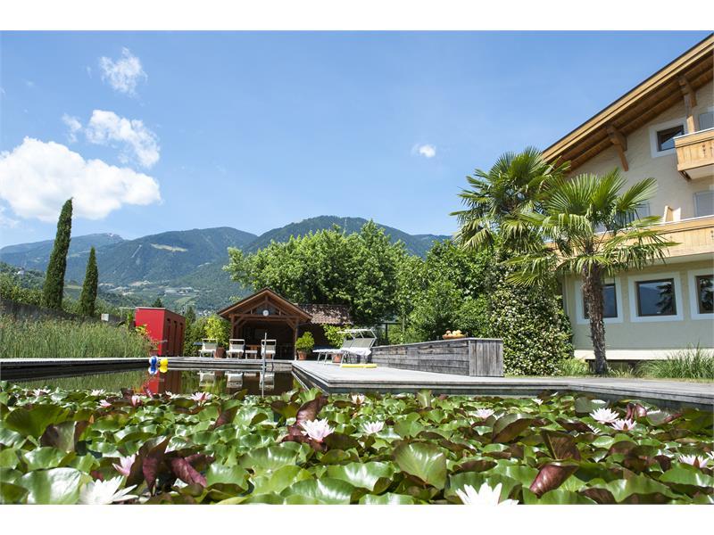 Weinsepphof Seerosen mit Palmen