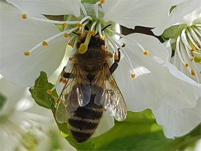 Erlebnisreiche Bienenwanderung