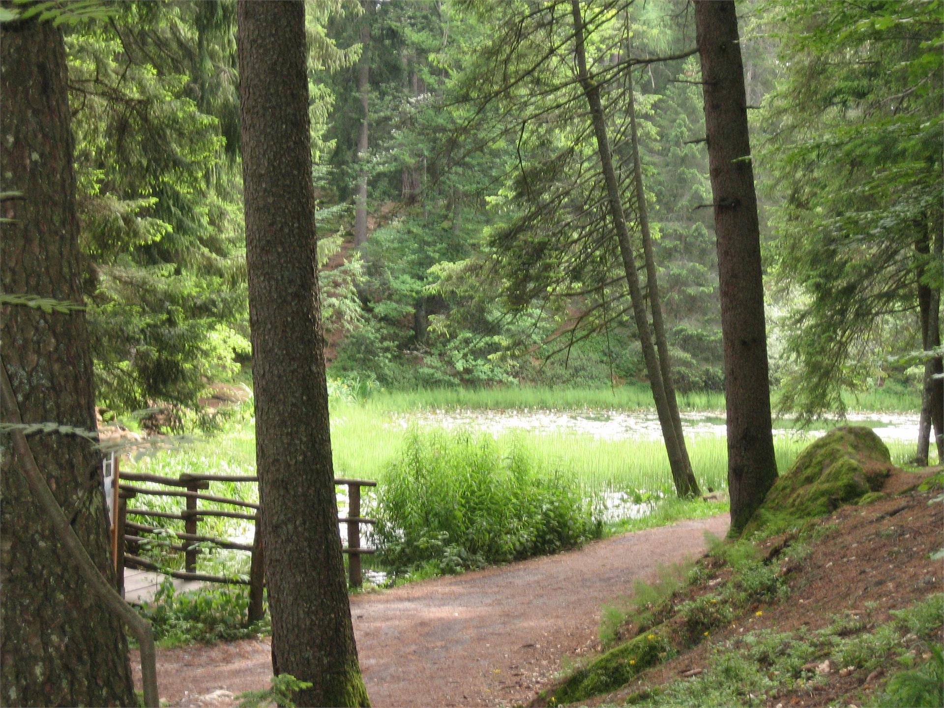 Sulfner Weiher Pond