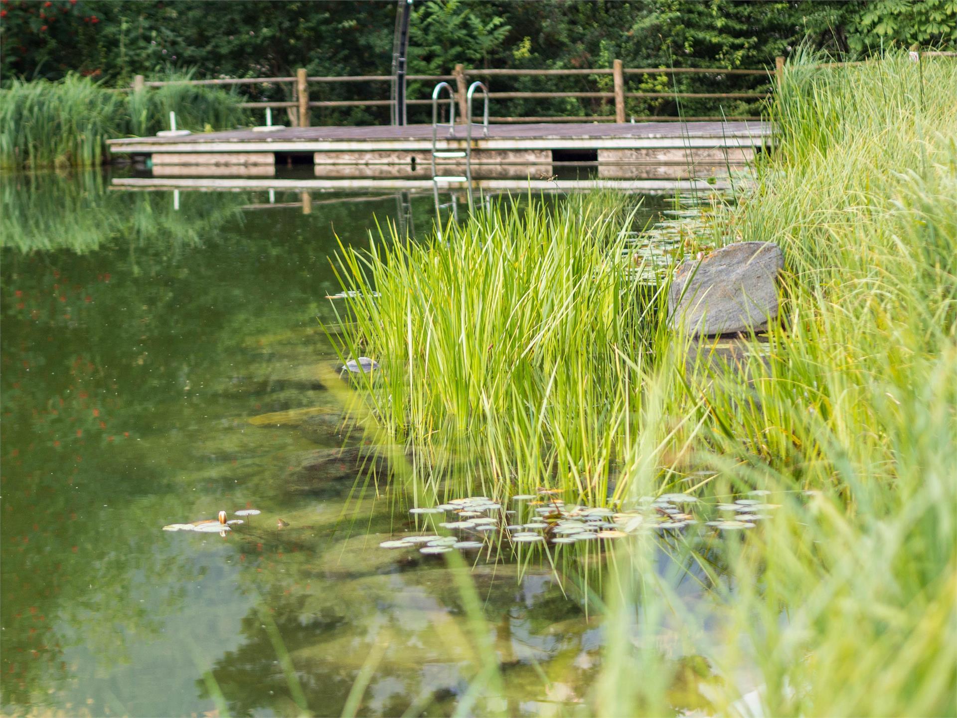 Naturbadeteich Lüsen