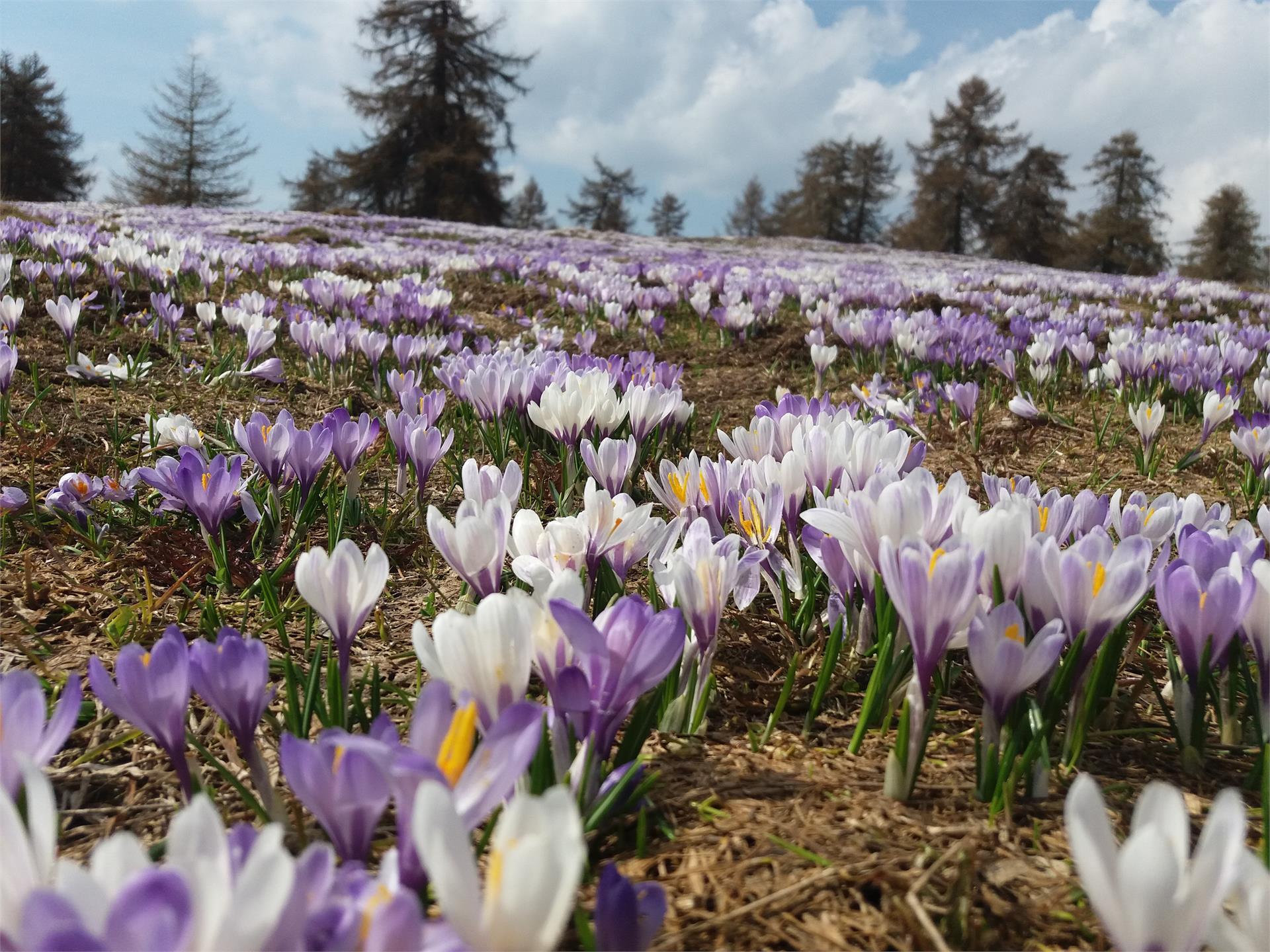 Escursione di primavera prati fioriti