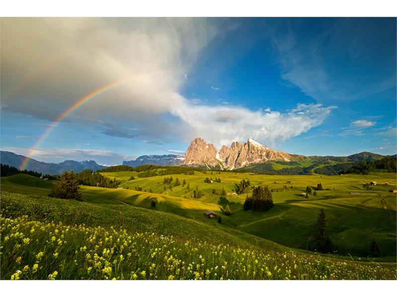 Bergsommer in den Dolomiten im Artnatur Dolomites |Michael Trocker photography©