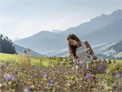 Escursione guidata nel Parco Nazionale dello Stelvio - Erbe salvatiche
