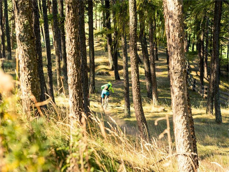 In mountainbike al Monte Tramontana presso Silandro e Laces
