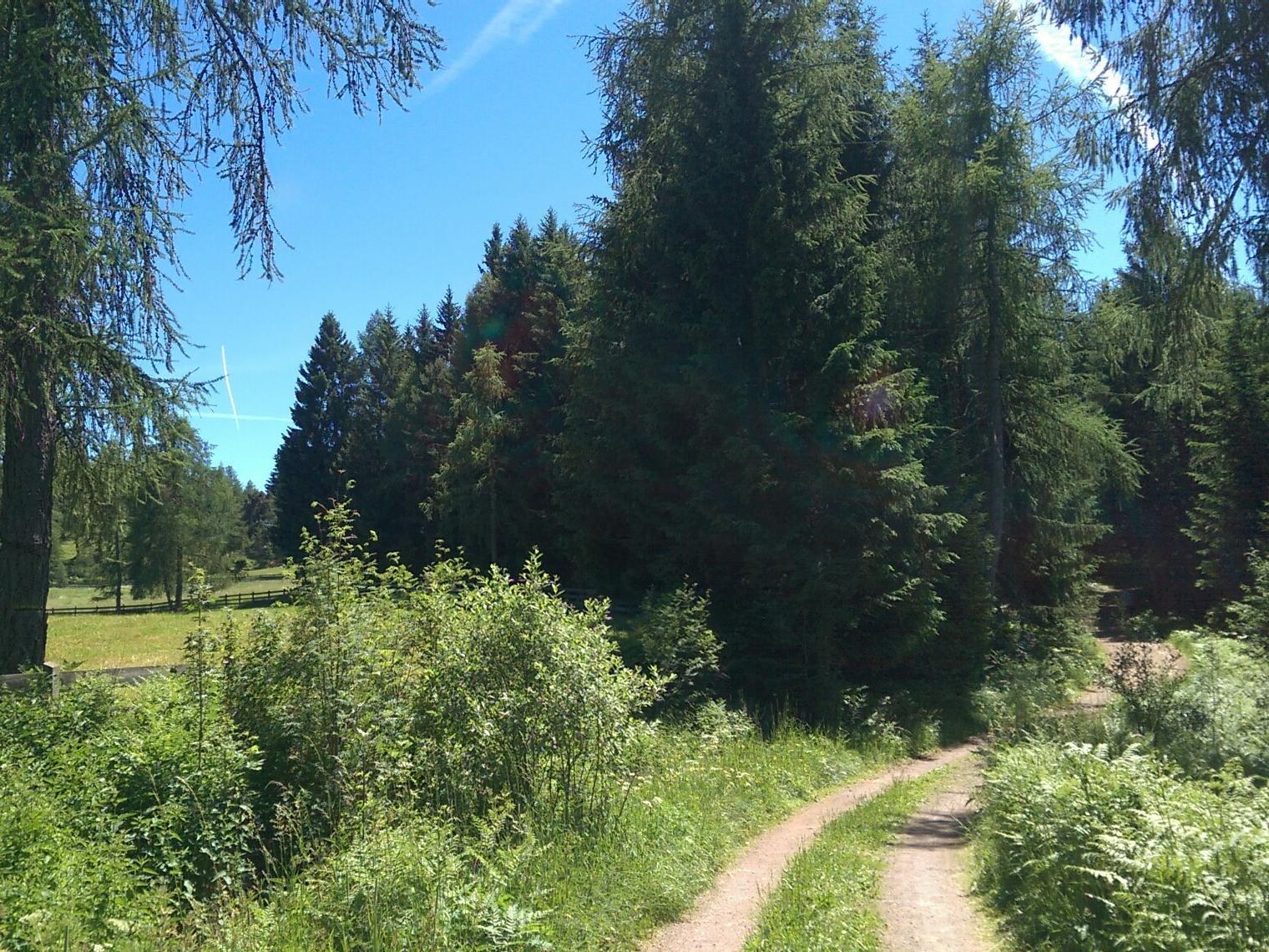 Wanderweg Tschaufen