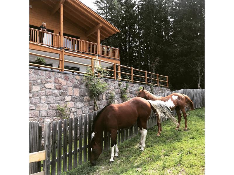 Cavalli di fronte di Piz Aich - Naturchalet Piz Aich in Hafling, Südtirol