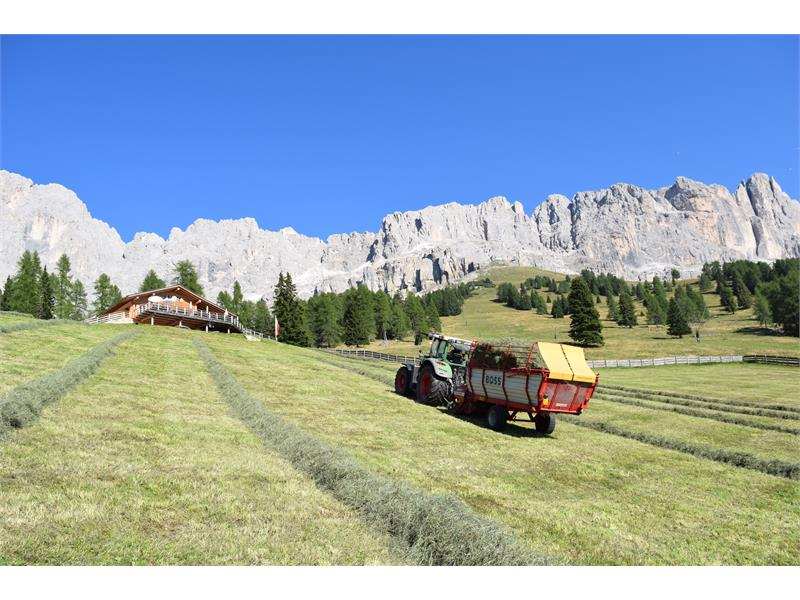 Messnerhof Urlaub auf dem Bauernhof Tiers