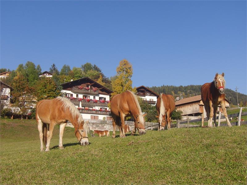 Divertimento a cavallo - Casa Hafner in Avelengo