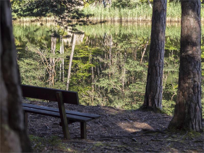 Montiggler Wald