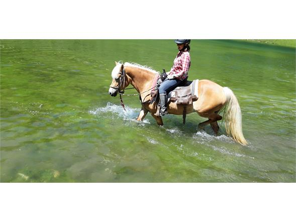 Bathing with horses