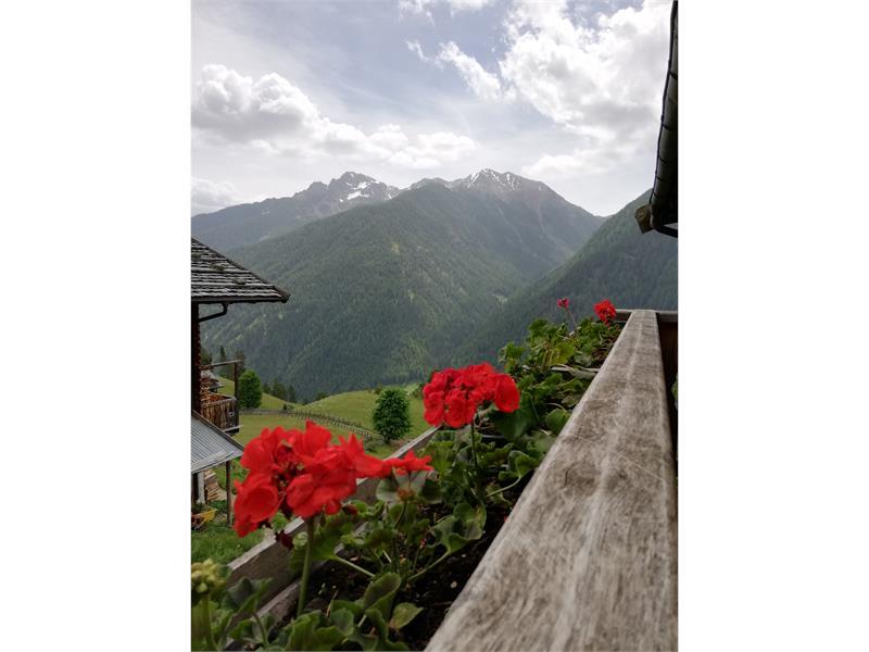visit panoramic