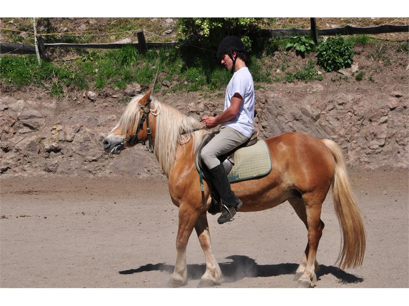 Il maso a fianco offre lezioni ed escursioni giornaliere a cavallo ecc.
