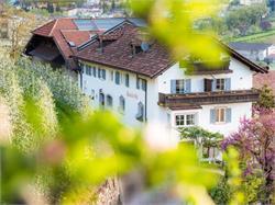 vineyard Pardellerhof Montin