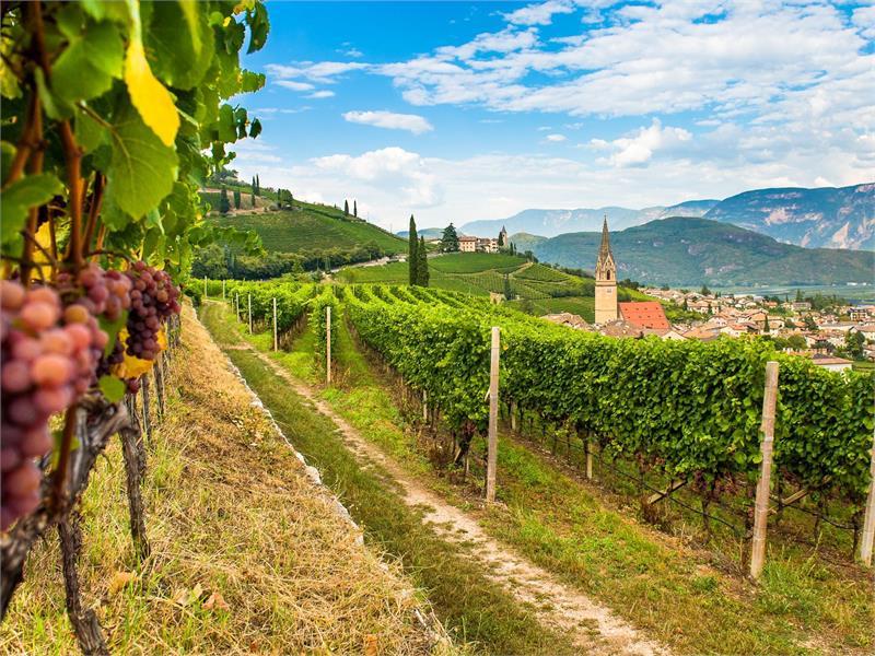 Gewürztraminer Weinweg in Tramin