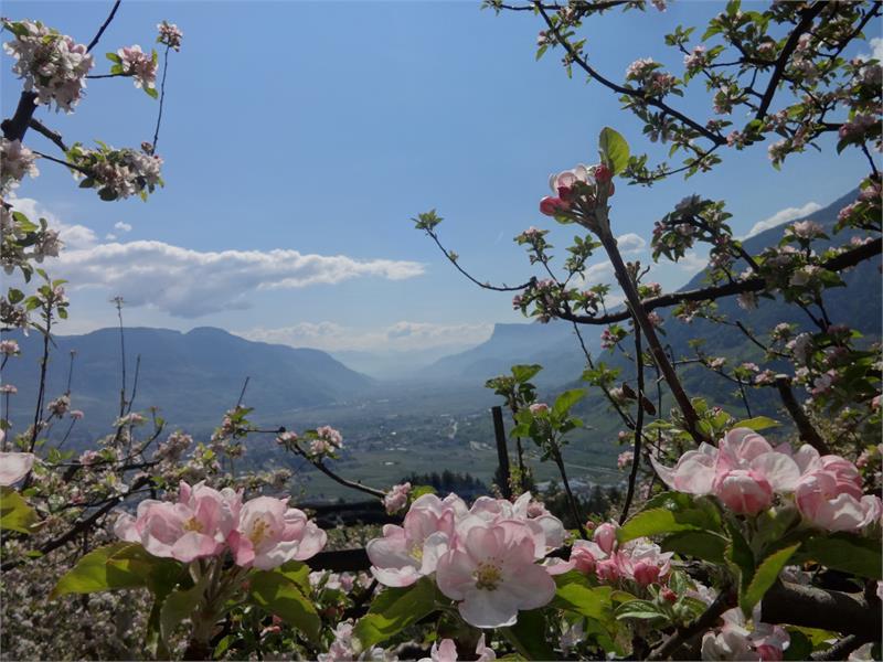 Umgebung Frühling