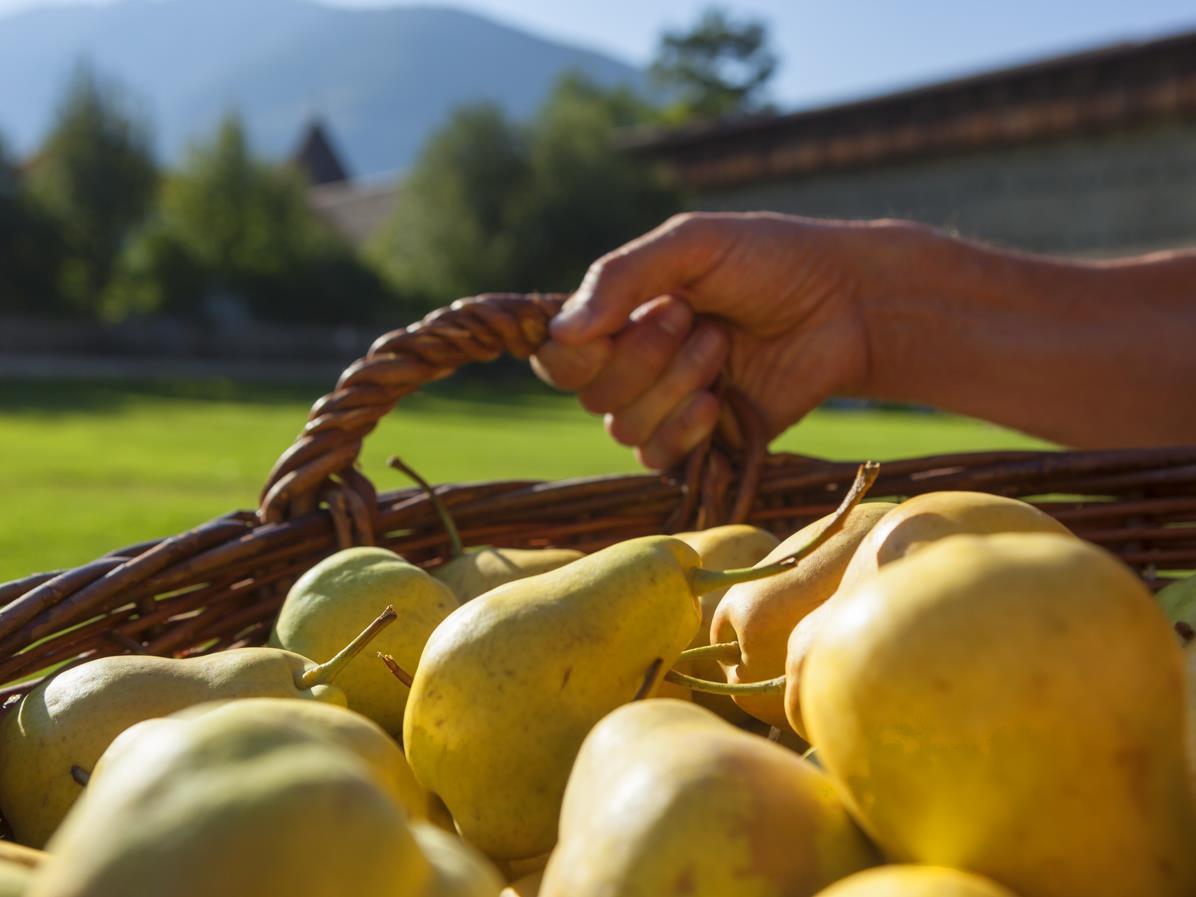 Mercatini sotto i portici: mercatino della pera Pala