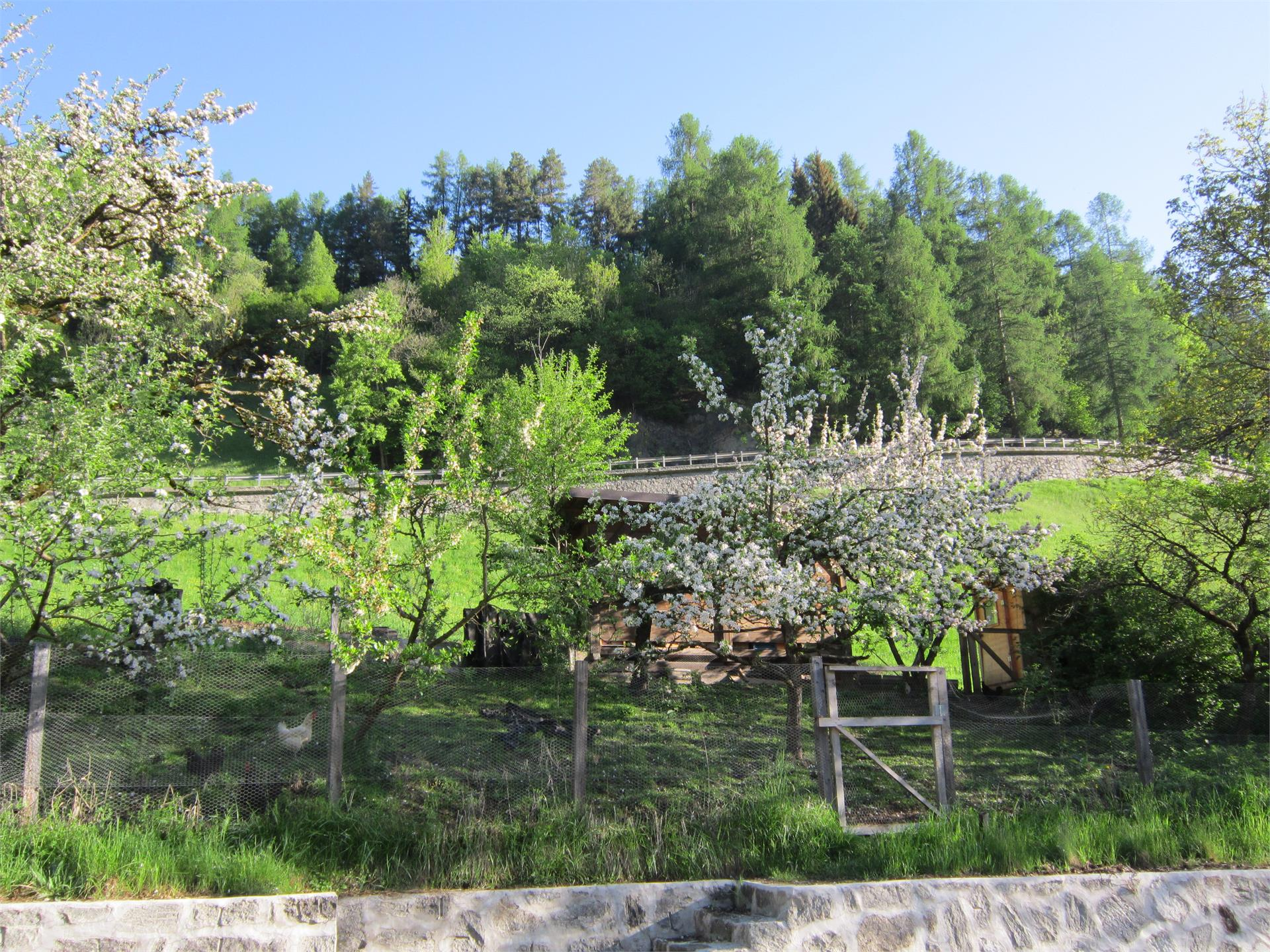 Bienenhaus und Hühnerstall