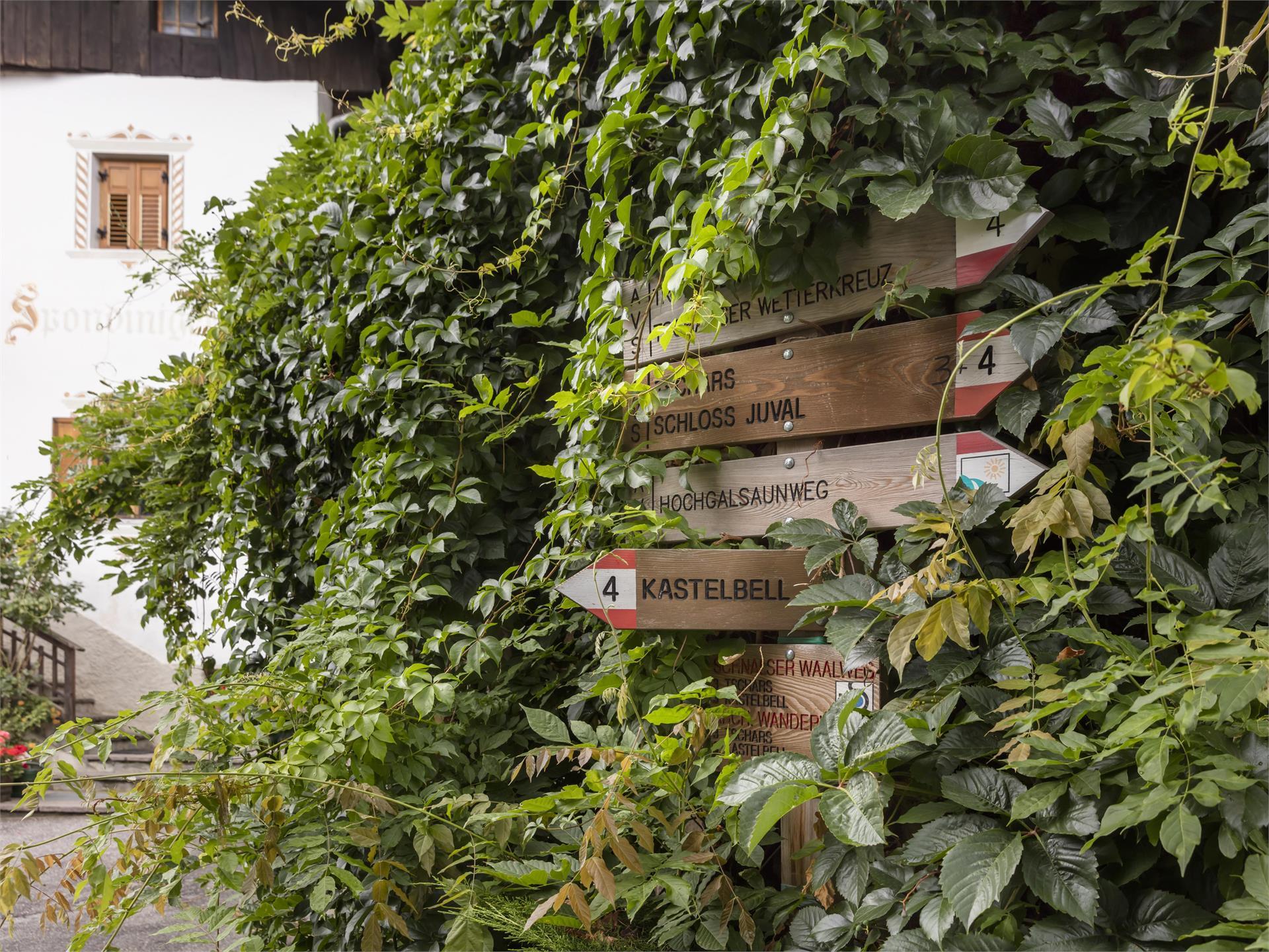 Per i possessori della VenostaCard:Escursioni guidati lungo il sentiero del vino