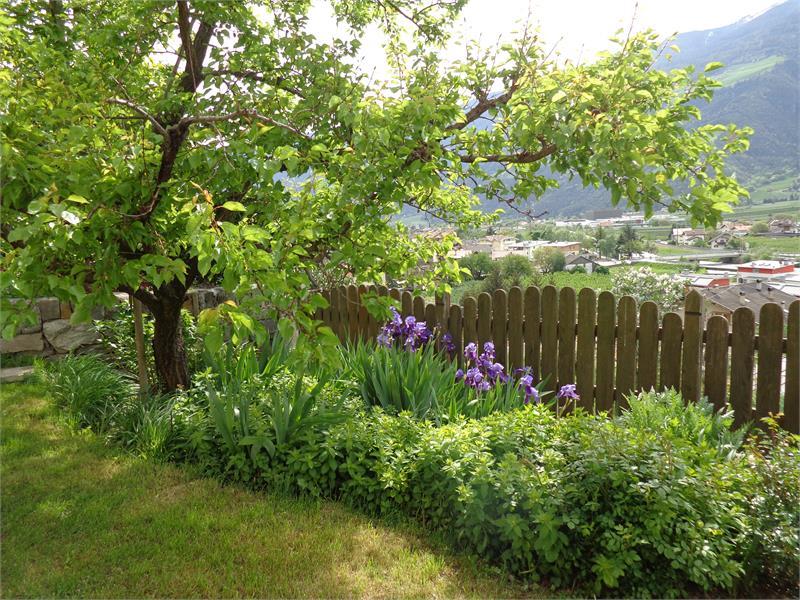 Garten Ferienwohnung