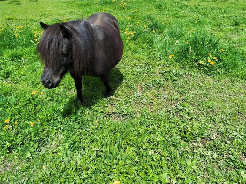 Pony Maja