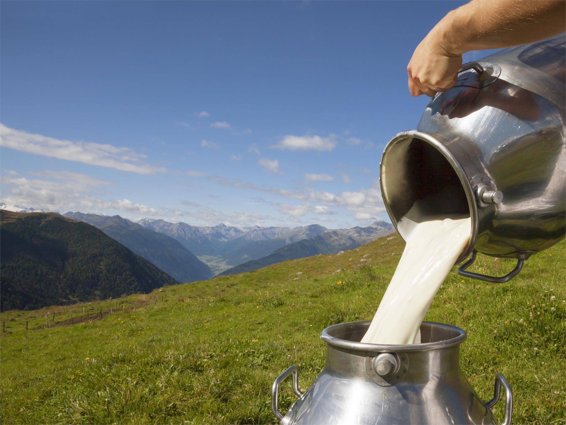 Come arriva il latte nella busta?