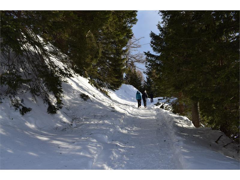 Wandern durch den Winterwald