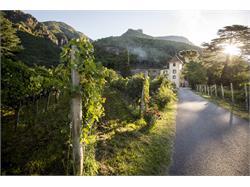 Kornell Winery