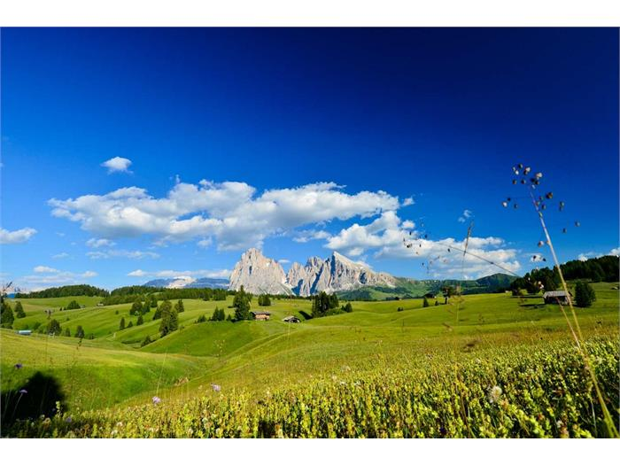 meadow of Alpe di Siusi