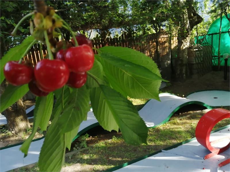 garden with mini golf