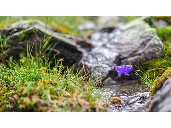 Blumen neben Wasserläufen