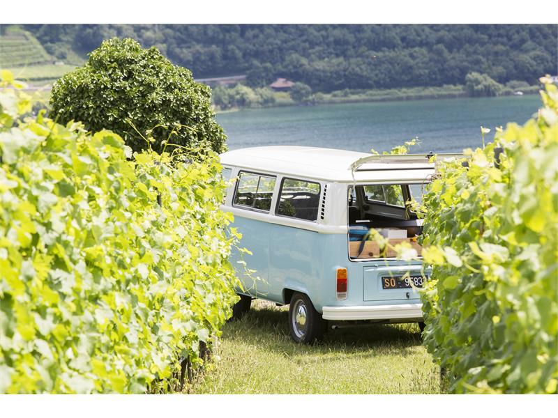 Tour del vino - auto d'epoca