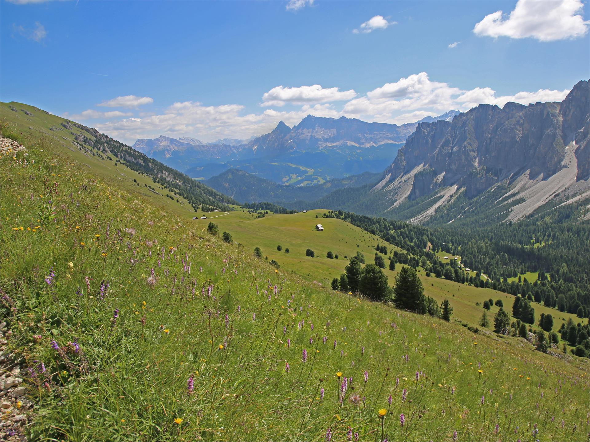 The green mountain pastures of Medalghes