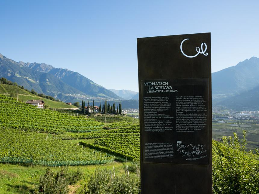 Herrliche Aussicht auf die Schickenburg entlang des WeinKulturWegs