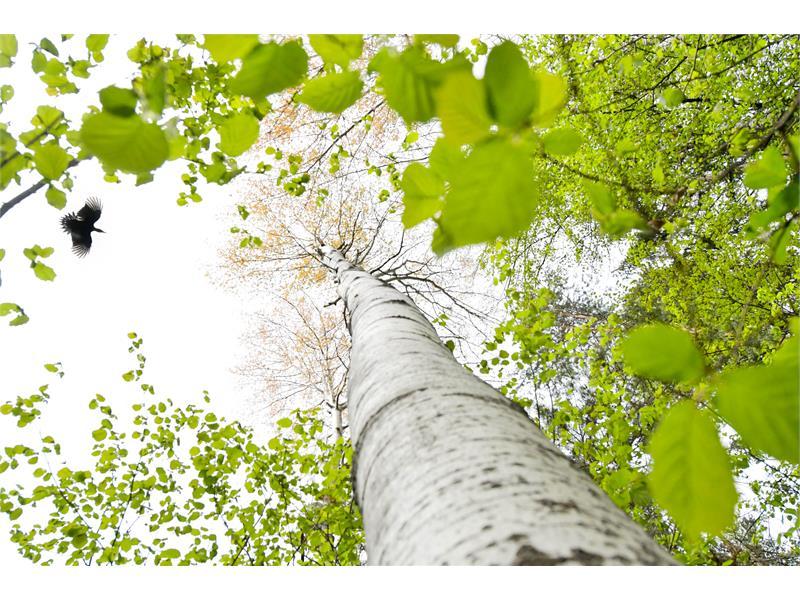 Frühlingserwachen - Seiser Alm Balance - Kraftort Dolomiten im Artnatur Dolomites - Michael Trocker©