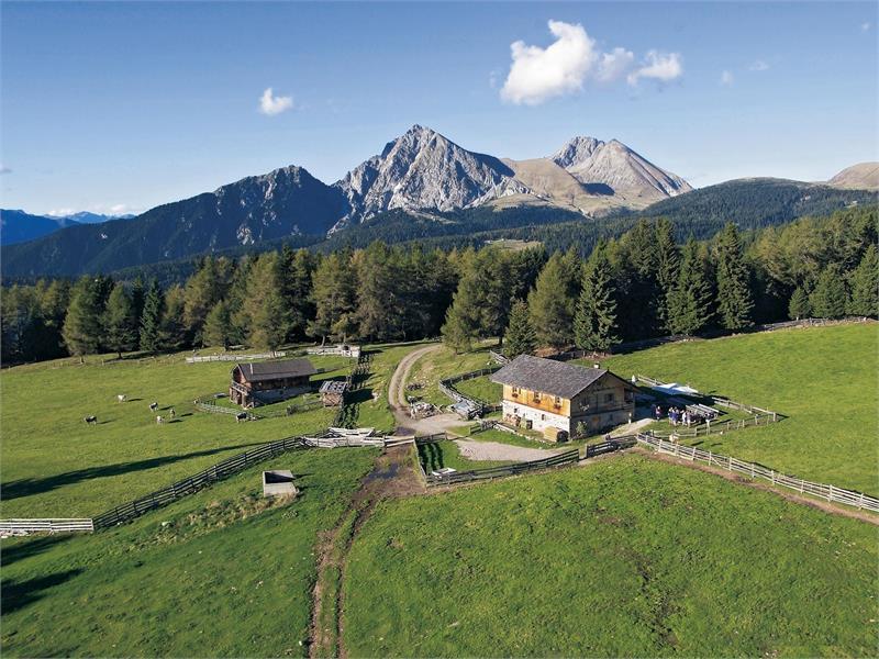 Malga Wurzer Alm ad Avelengo, Alto Adige