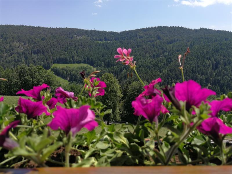 Farm holidays in Vöran/Verano - Great views from the Untermathon Hof Farm