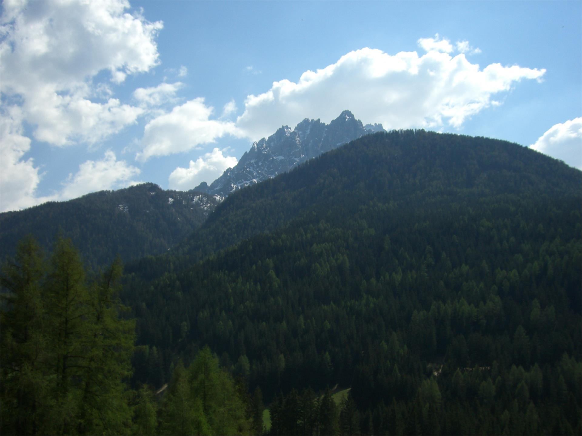 Summer hiking tour: Dobbiaco Nuova/Neutoblach - Elsler Kaser - San Candido/Innichen