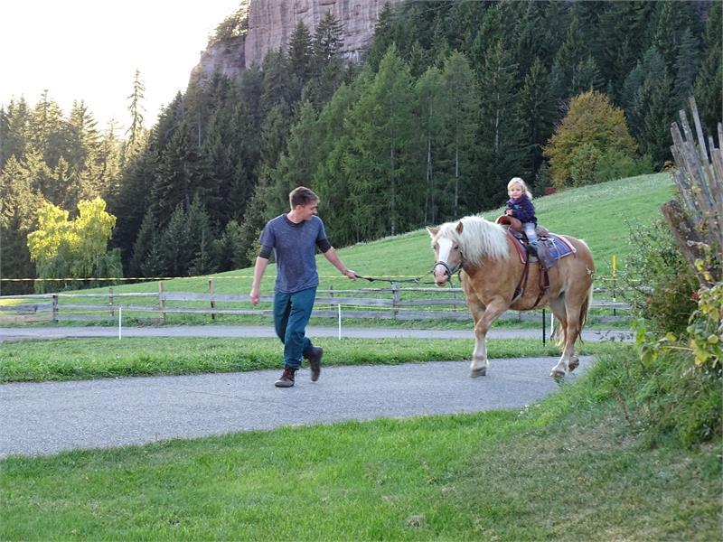 Cavalli Haflinger al maso Rotsteinhof a Verano, Alto Adige