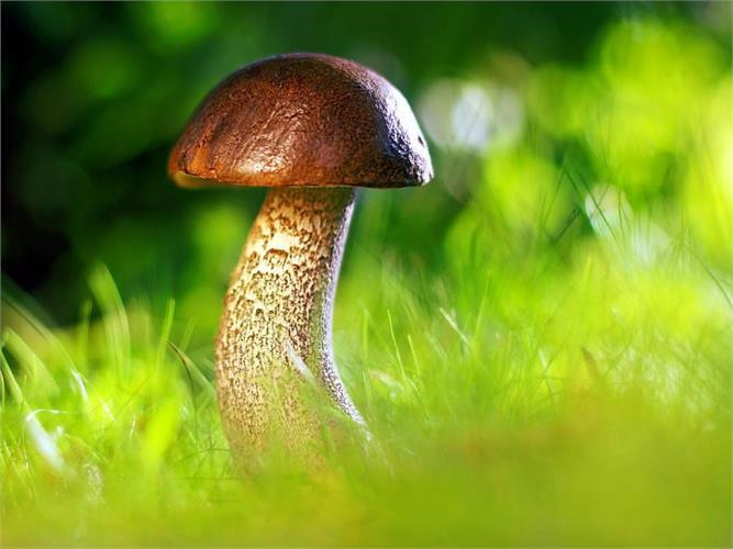 Genehmigung für das Sammeln von Pilzen - Gemeinde Sterzing