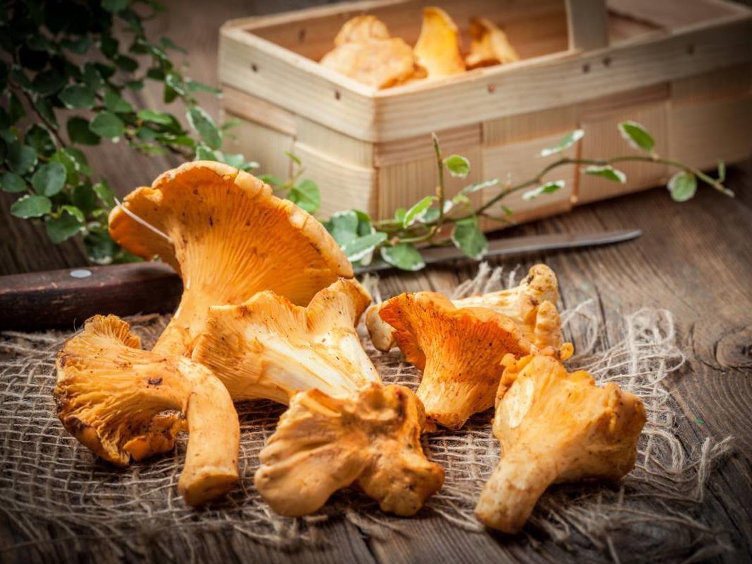 Presentazione sui funghi con Claudio Rossi