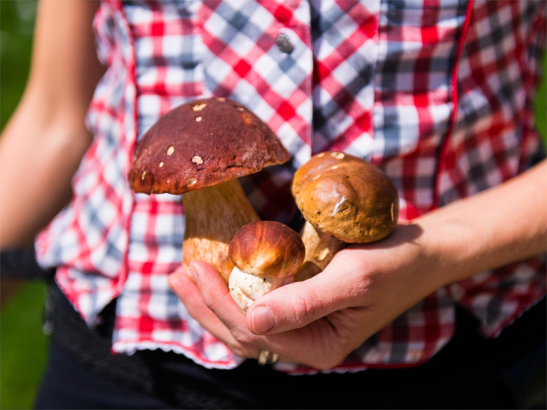 I funghi dei nostri boschi