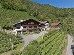 Bognerhof - Holiday on a farm