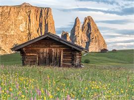 Escursione floristica all'Alpe di Siusi