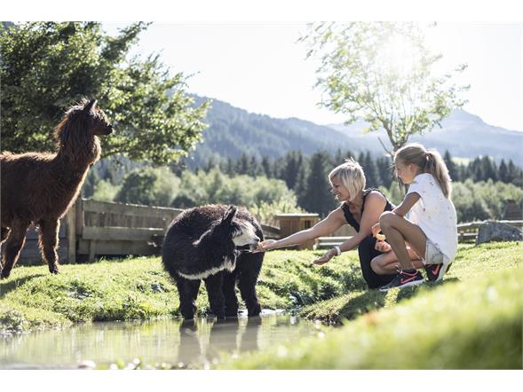 Alpaca Alphotel Tyrol Wellness, Chalets & Family Resort Ratschings
