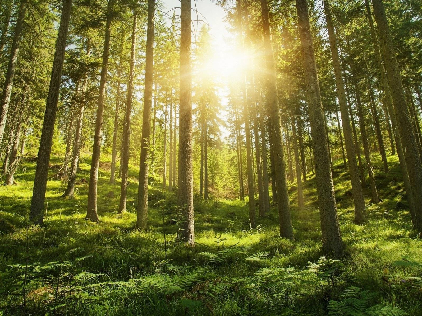 Südtirol Balance: Waldbaden