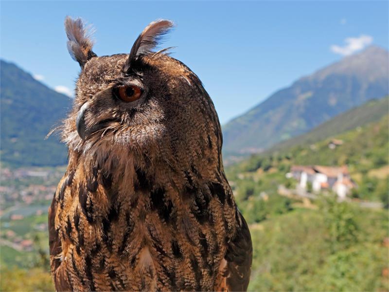 Pflegezentrum für Vogelfauna Schloss Tirol