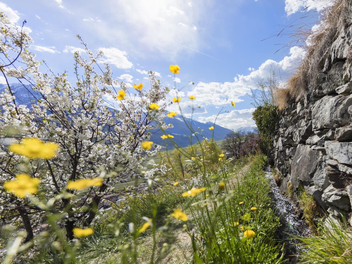Kraftplätze am Vinschger Sonnenberg - Entspannen und die Lunge öffnen