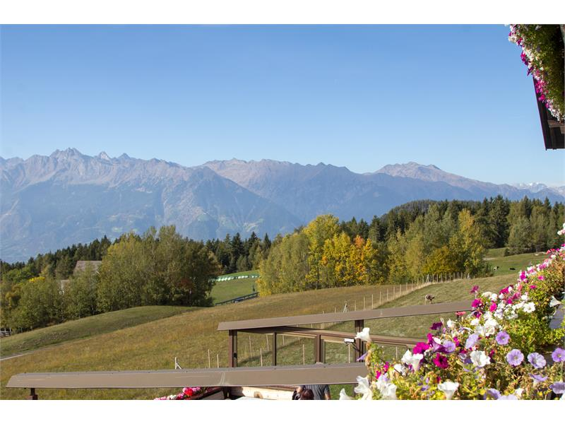 Sunny views from the guesthouse Alpenrose